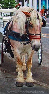 NY_Horse_Carriage_IMG_0670b